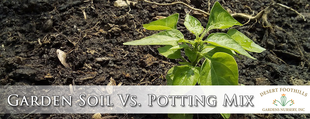 Garden Soil Vs Potting Mix Desert