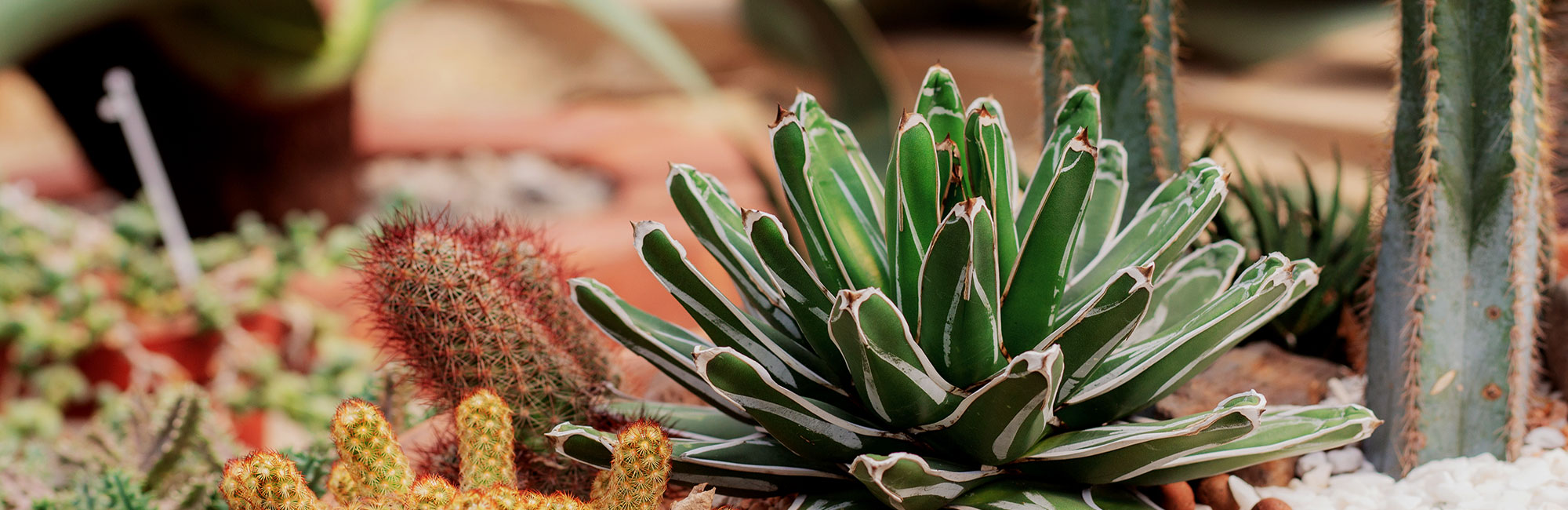 Desert Plant Tree Landscaping Nursery In Cave Creek Phoenix