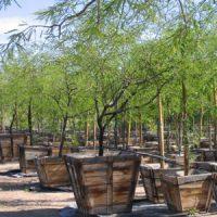 desert-plants-04