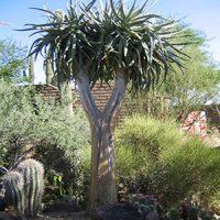 desert-plants-07