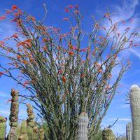 desert-plants-14